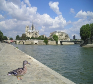 Duck in France